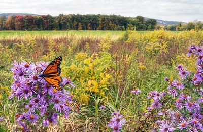 Catskills/Hudson Valley