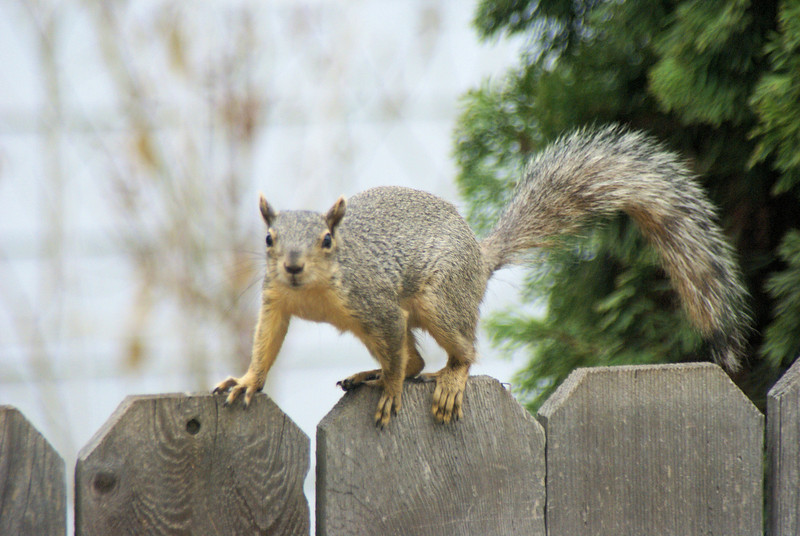 Moscow the Squirrel wisperer.jpg