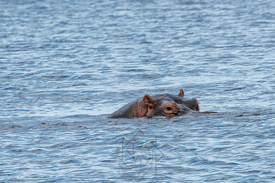 Chobe River_3543-Edit