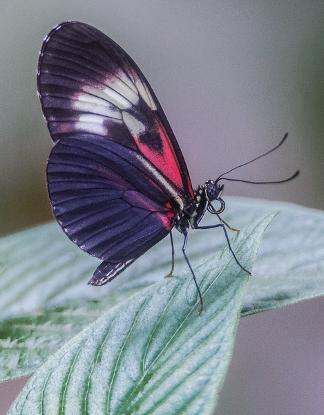 Butterfly World  - Coconut Creek, Florida