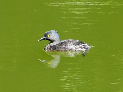 Mass Audubon Tour Highlights 2014