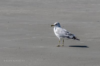 2019-02-05 Tybee Island Beach Walk
