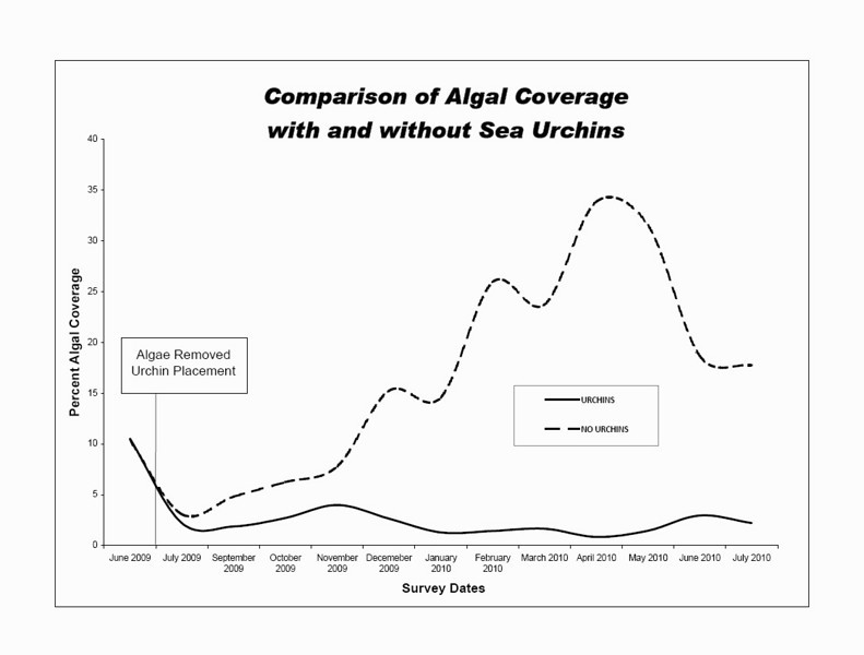 A graph showing the effect of sea urchins on algae abundance over a one year time period.