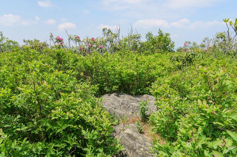 Grassy Cove Top (Summit) -- 6,040'