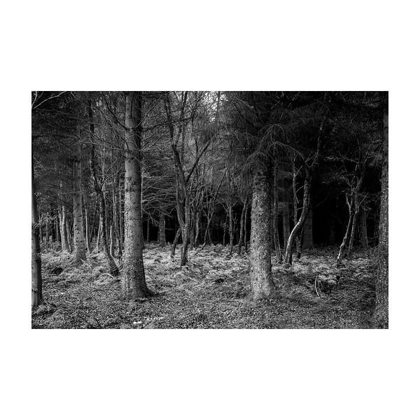 317_Trees_10x10.jpg
