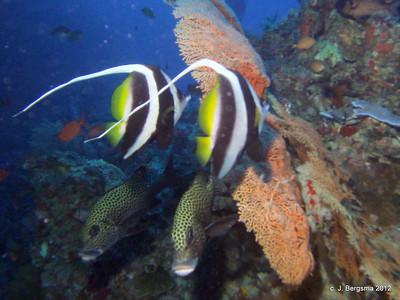 Palau 2012