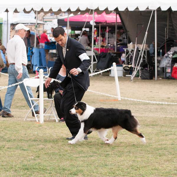 p20150301_USASA Specialty_Scottsdale Kennel Club_348.jpg