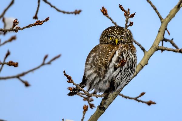Test Owl