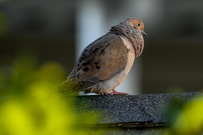 21MayHummingbirds (30 of 53).jpg