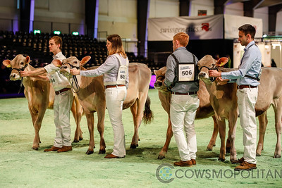 Swiss Expo Brown Swiss Heifers 2018