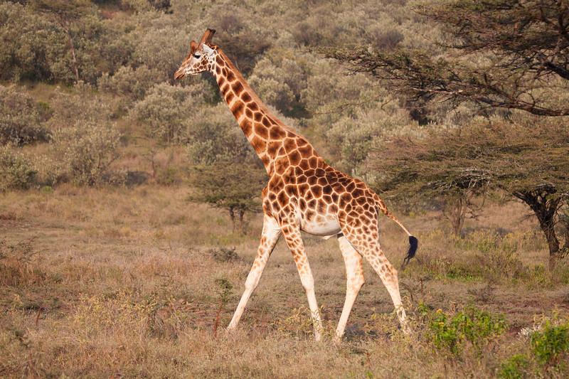 Kenya 7715.jpg