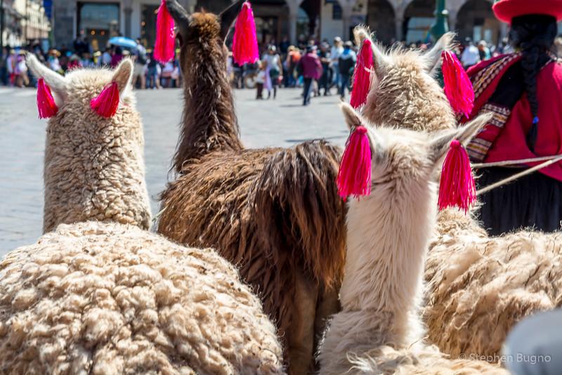Cusco-2809.jpg