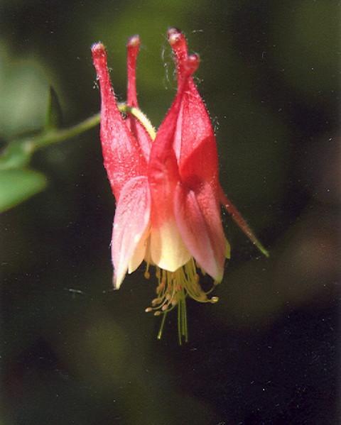 Bell Flower_2.jpg