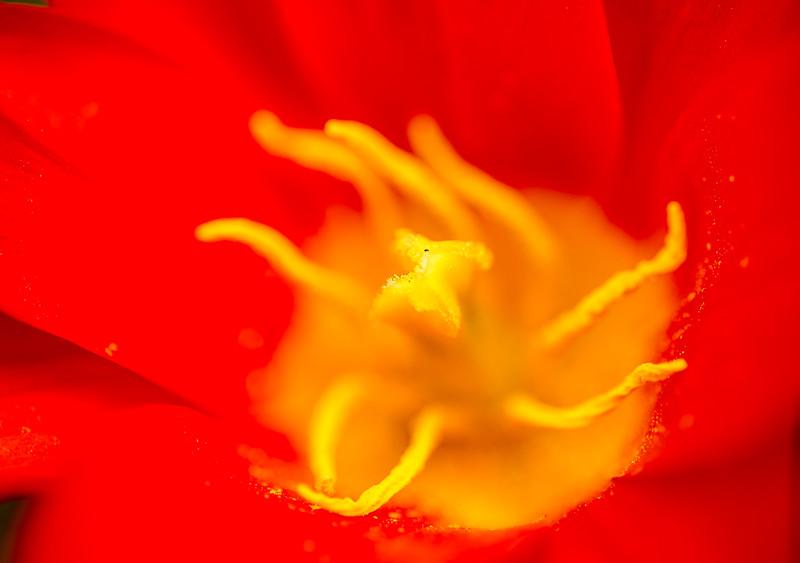 Cheekwood Flowers-20150402-21_17_16-Rajnish Gupta.jpg