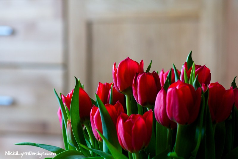 Forcing Tulips to Bloom Indoors- Chose a container that the outside diameter rim is at least 5-inches. Plant at least 3 bulbs in the container with the top 1/2-inch of the bulb showing.