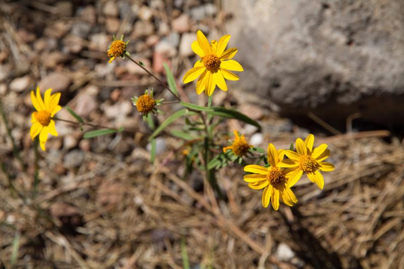 2012_10_02 Grand Canyon 025.jpg
