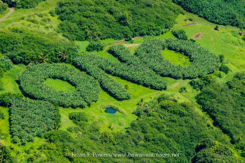 Ono farms.jpg