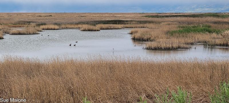 05-19-2021 Summer Lake Wildlife Refuge-19.jpg