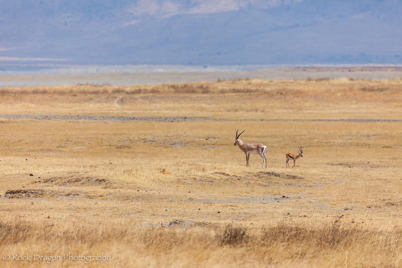 Ngorongoro-75.jpg