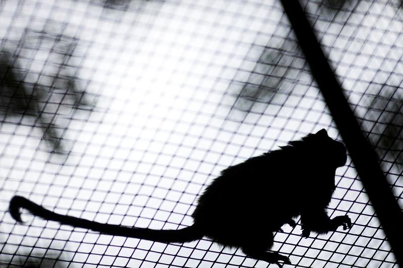 Little monkey in a cage, Berlin zoo, Germany
