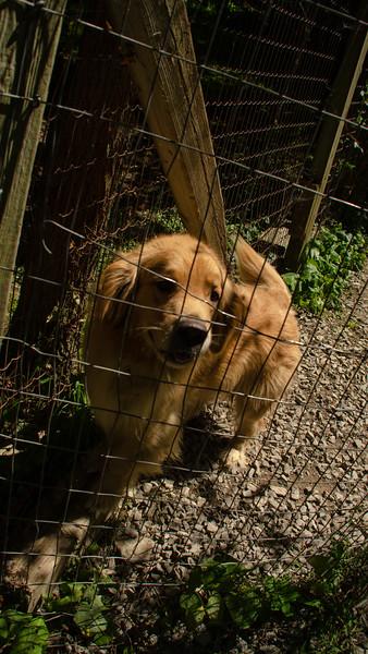 PuppyParty18-338.jpg