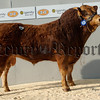 Annadale Anonymous from C Murray, Newry, Co. Down, made 12,000gns at Carlisle