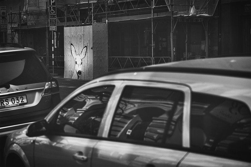 We encountered this deer mural/poster throughout Stockholm. The deer's eyes always seemed to be following you.