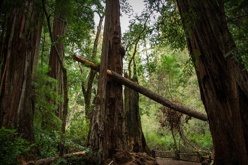 Redwood-27.jpg