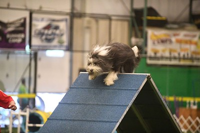 Gloucester County Kennel Club AKC Agility Trial June 23-24