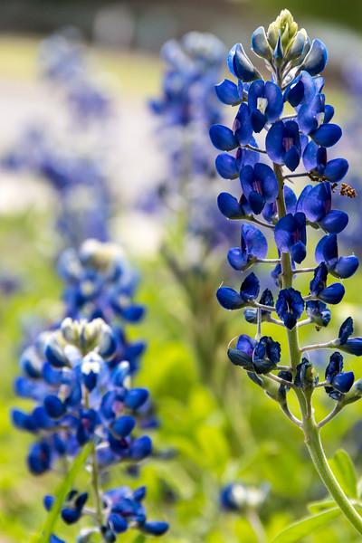 Texas Spring-0686.jpg