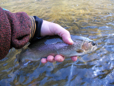 Chattooga Trout