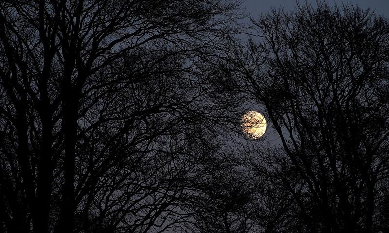 . . . don't the moon look good, momma, shinin through the trees . . .   3.45pm, 02/01/15