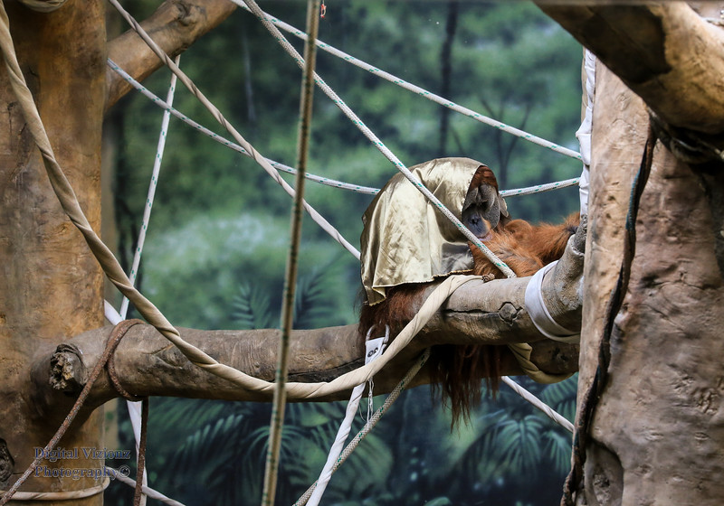 2016-07-17 Fort Wayne Zoo 486LR.jpg