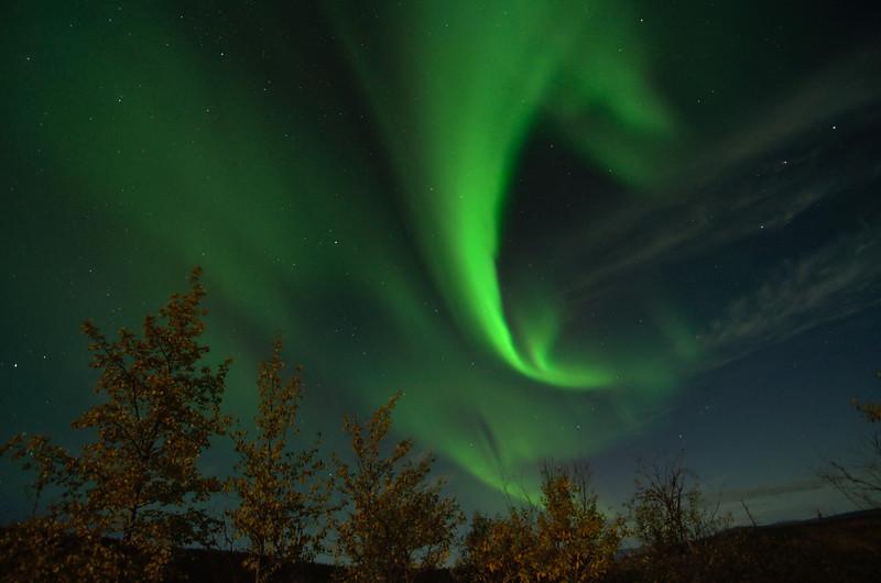 Aurora over birch trees 4