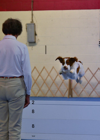 Oriole Dog Training Club, August 2012