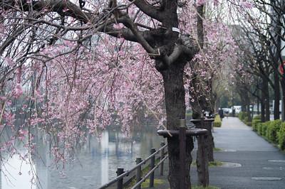 Tokyo March 2007
