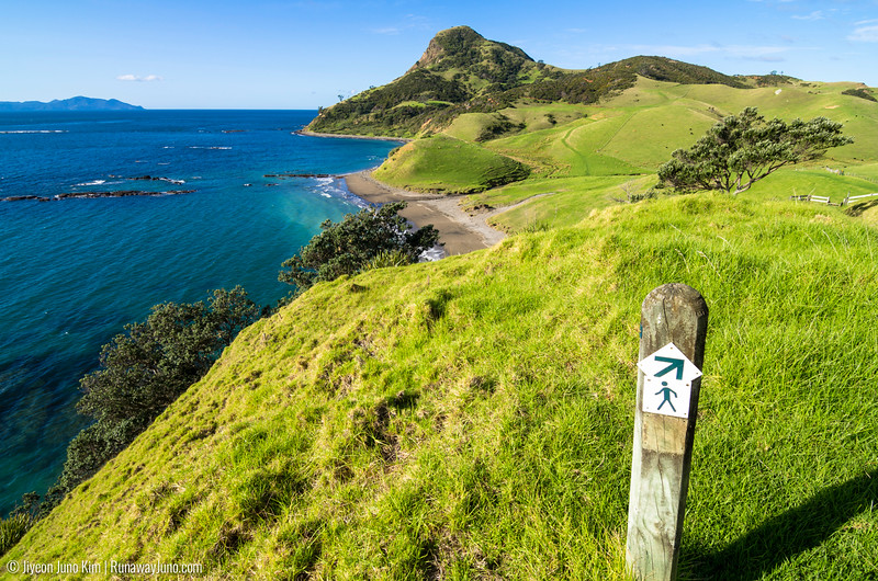 Coastal Walkway in Coromandel Peninsula