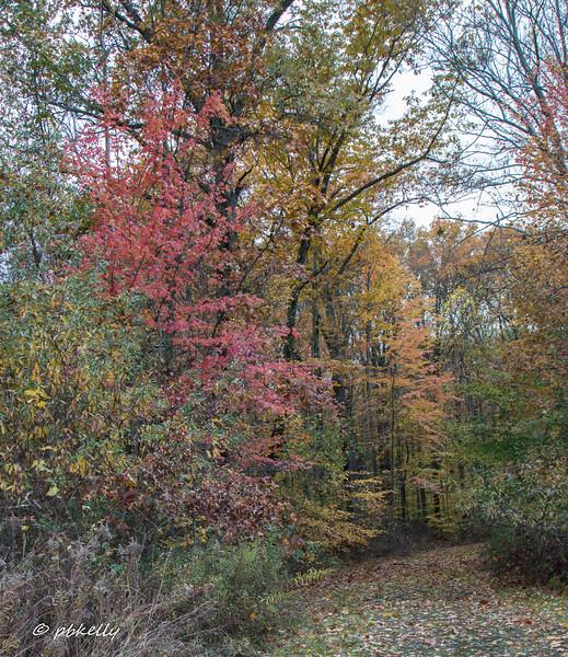 fall scene 110717-3.jpg