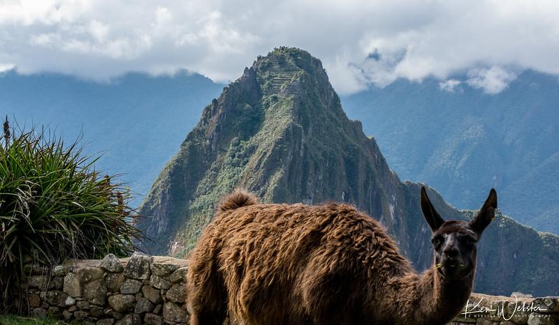 2018 Machu Picchu-87.jpg