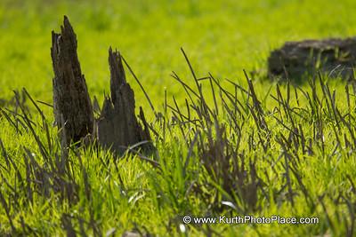 Fontenelle Forest  - April 6 2012