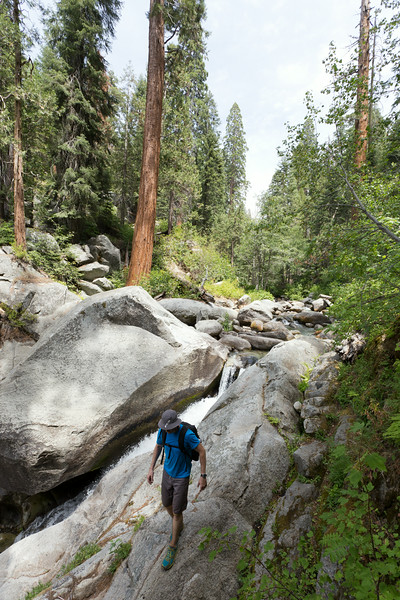 Sequoia_0546.jpg