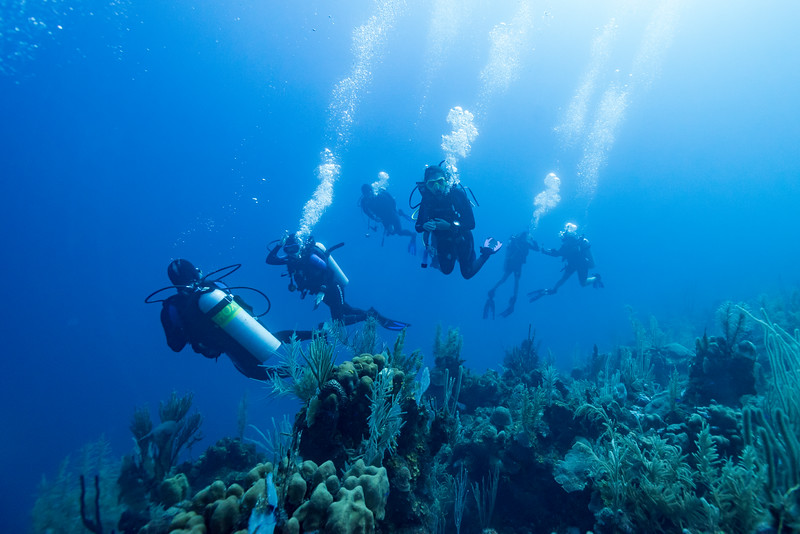 Scuba divers underwater near coral reef, Dive Site, East Wall, Belize