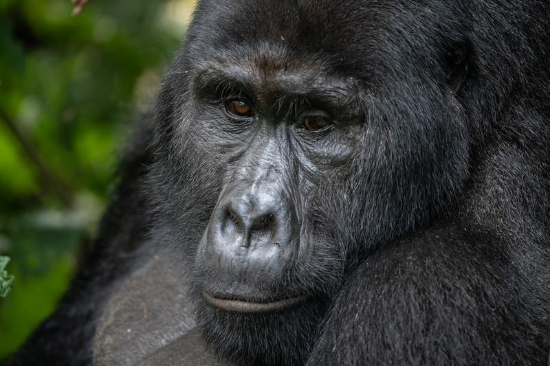 Uganda_T_Gor-2430.jpg