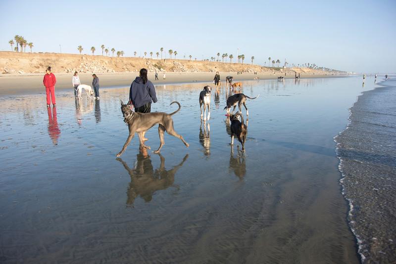 dogs_beach-48.jpg