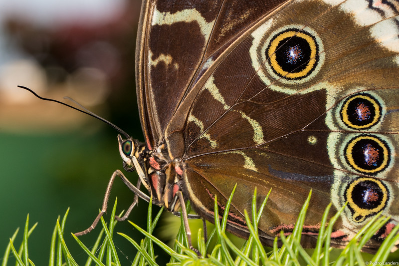 Butterfly Place – Detail 3
