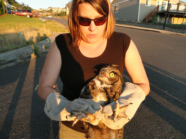 1 Great Horned Owl Release