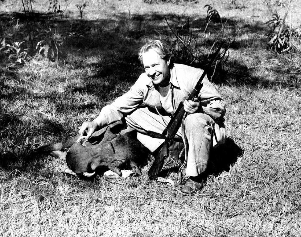 . MAR 15 1950  While the skin, bones and ivory of elephants remain a mark in the African landscape for months and even years, the whole of less animals such as this wart hog are completely devoured by hyenas, jackals and vultures within twenty-four hours. The hunter above is Wallace Taber, Denver Post outdoor writer; the gun, an Ackley .228 magnum.  Credit: Denver Post