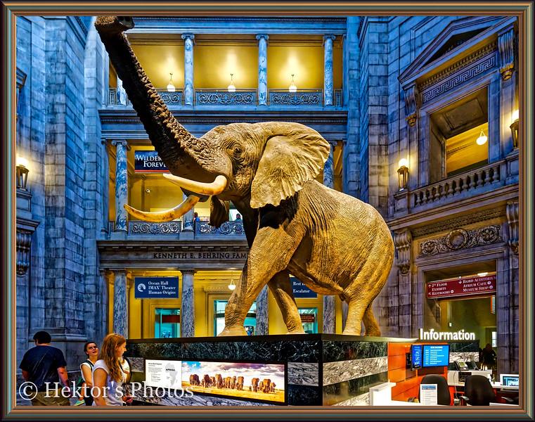 National History Museum-3.jpg