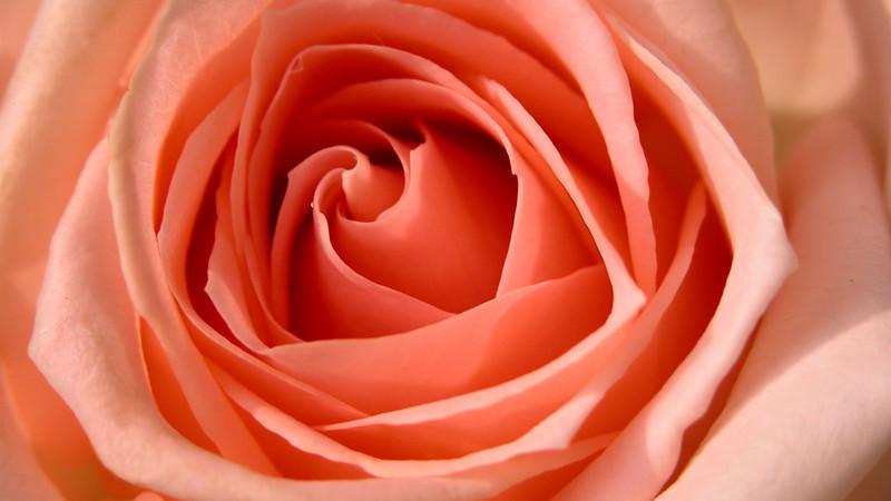 Flowers2 1920x1080 (10).jpg