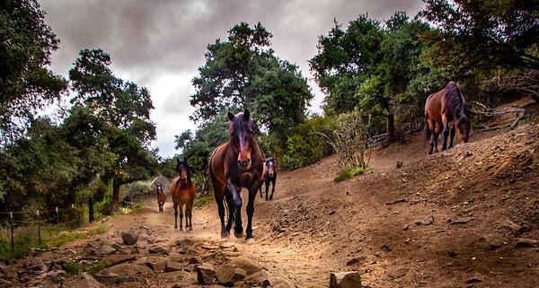 Horses of Tir Na Nog - June 5, 2020